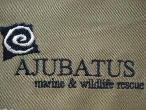 Digitizing-Branding-Emonti-Ajubatus